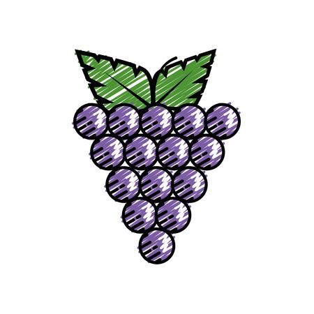 Delicious grapes fruit icon vector illustration graphic design