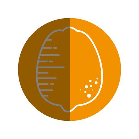 Lemon citric fruit icon vector illustration graphic design