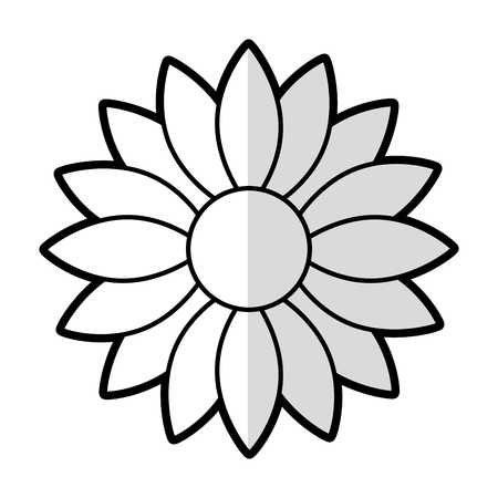 cute sunflower decorative icon vector illustration design