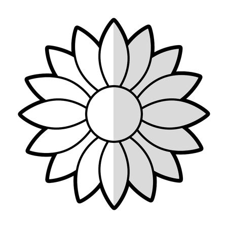 cute sunflower decorative icon vector illustration design