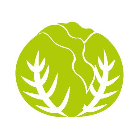 cabbage fresh vegetable icon vector illustration design