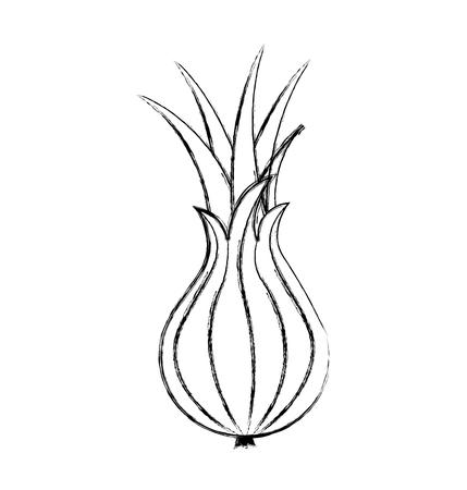 custard apple fresh vegetable icon vector illustration design Illustration