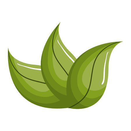Leafs Plant Decorative Icon Vector Illustration Design Banque d'images - 76963349