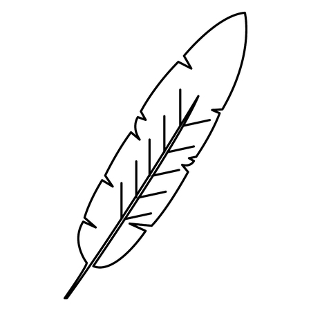 beauty and exotic feather vector illustration design Stock Vector - 76993064