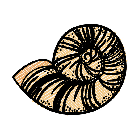sea snail icon over white background. vector illustration Stock Vector - 77196454