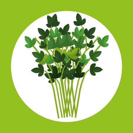 Leafs corainder gesunde Ernährung Vektor Illustration design Standard-Bild - 77278530