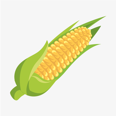 corn fresh and healthy vegetable vector illustration design