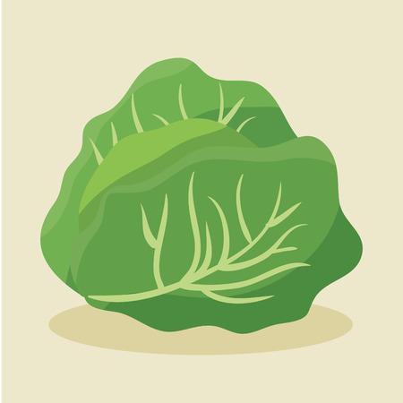 lettuce fresh and healthy vegetable vector illustration design