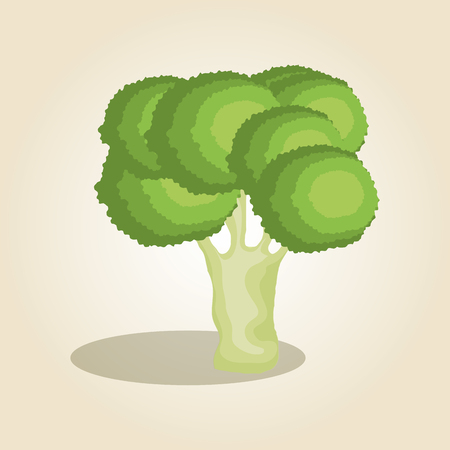 broccoli fresh and healthy vegetable vector illustration design