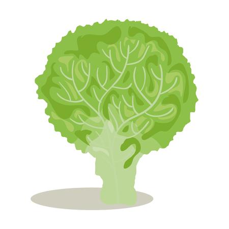 ontwerp van de broccoli het verse en gezonde plantaardige vectorillustratie