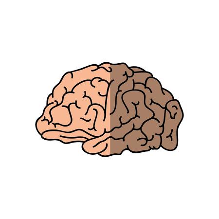Human brain symbol icon vector illustration graphic design Stock Vector - 77428861