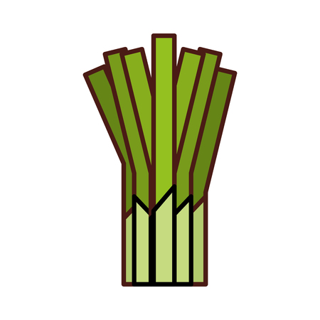 셀러리 신선한 야채 아이콘 벡터 일러스트 디자인 일러스트
