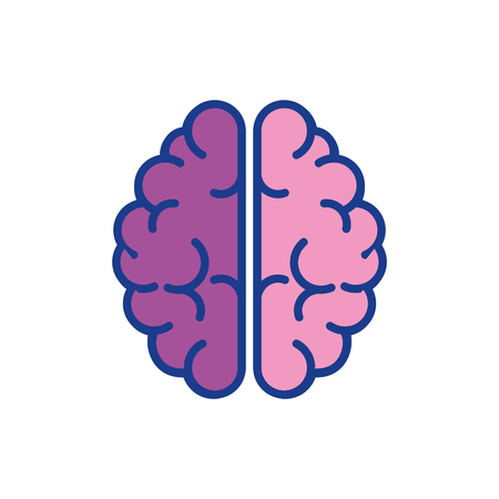 desing: brain organ icon over white background . colorful desing. vector illustration