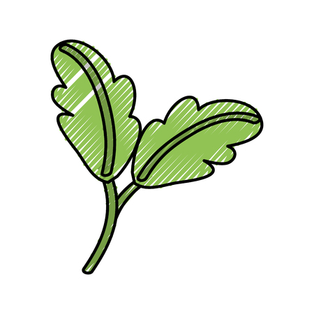 Leaves nature ecology vector illustration graphic design
