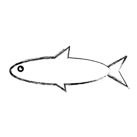 Fish sea animal vector illustration graphic design