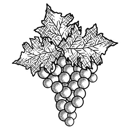wine grapes isolated icon vector illustration design Illustration