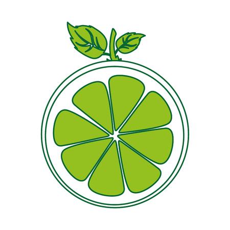half citrus fruit icon vector illustration design