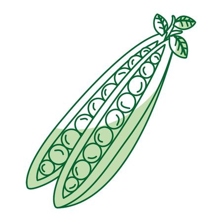 string bean fresh vegetable icon vector illustration design Illustration