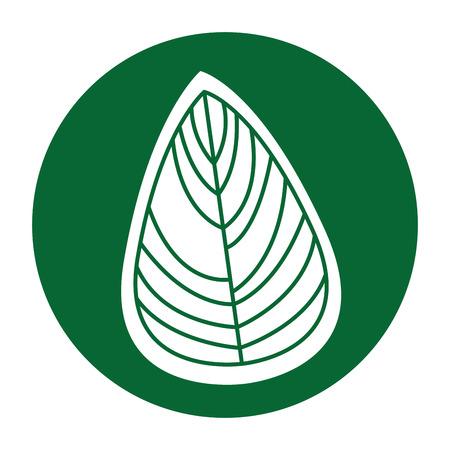 original ecological: leaf decorative drawing icon vector illustration design