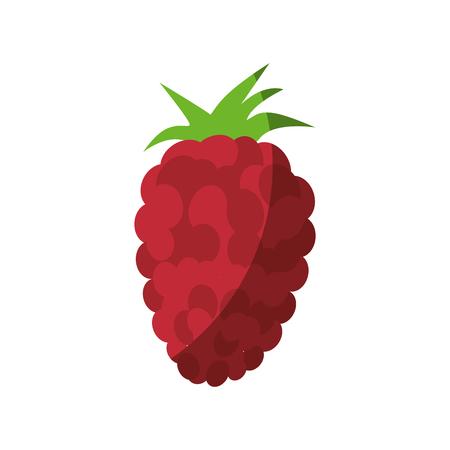 blackberry fruit icon over white background vector illustration Ilustrace