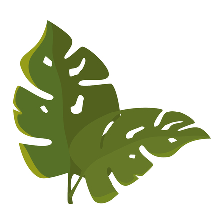 tropical leaves icon over white background colorful desing vector illustration