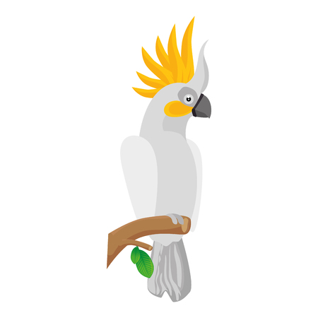 cockatoo bird icon over white background colorful design vector illustration