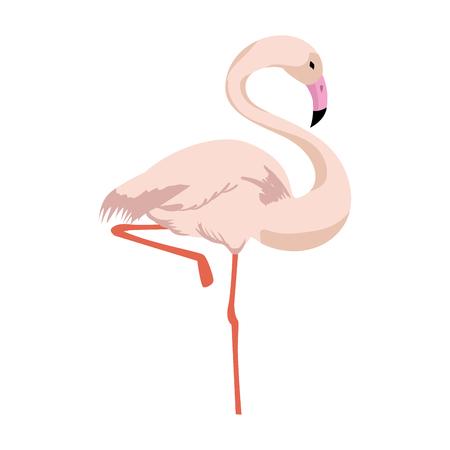 flamingo bird icon over white background colorful design vector illustration