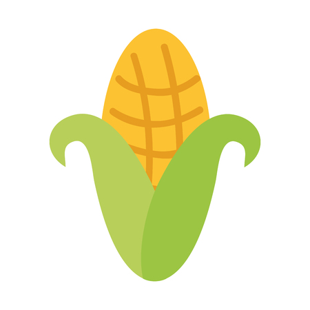 Cob corn isolated icon vector illustratie ontwerp Stockfoto - 80035214