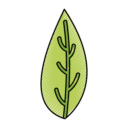 leaf plant isolated icon vector illustration design 向量圖像