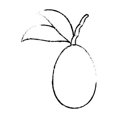 mango fruit icon over white background vector illustration