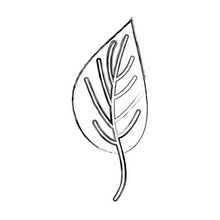Progettazione dell'illustrazione di vettore dell'icona isolata pianta della foglia Archivio Fotografico - 80036512