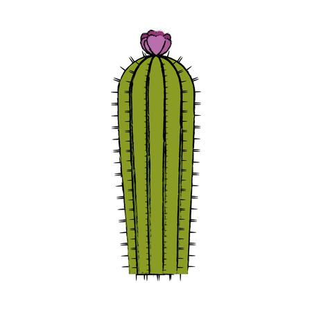 Cactus icône sur fond blanc design coloré illustration vectorielle Banque d'images - 80045633