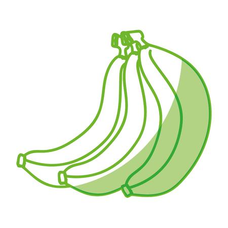 bananas fruit icon over white background vector illustration