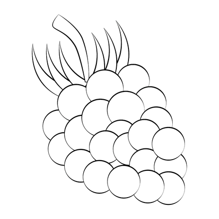 market gardening: Grapes delicious fruit icon vector illustration graphic design