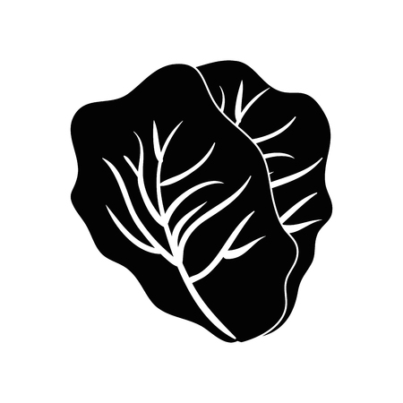 Fresh lettuce food icon vector illustration graphic design Stock fotó - 80196297