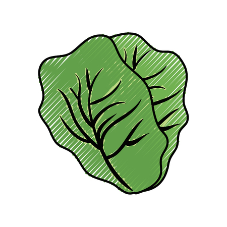 Fresh lettuce food icon vector illustration graphic design