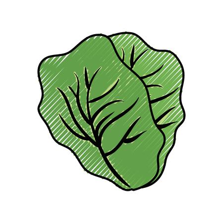 Fresh lettuce food icon vector illustration graphic design