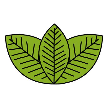 COlogie végétale leafs conception icône illustration vectorielle Banque d'images - 80240518