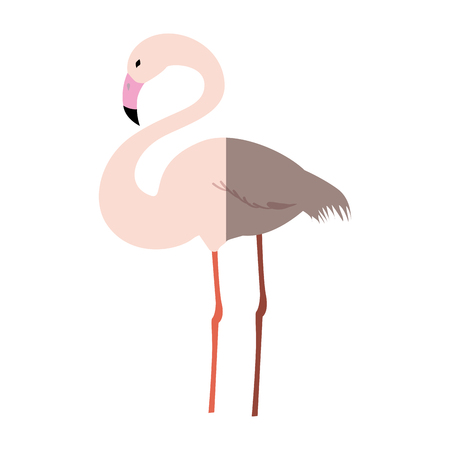 flamingo exotic bird icon vector illustration graphic design Illustration