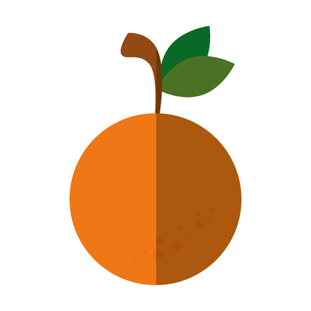 market gardening: orange fruit icon over white background vector illustration Illustration
