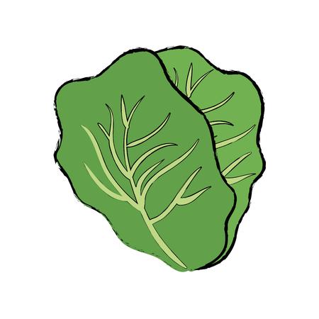 lettuce vegetable icon over white background vector illustration Illustration