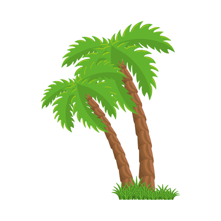 isolated beach palm icon vector graphic illustration