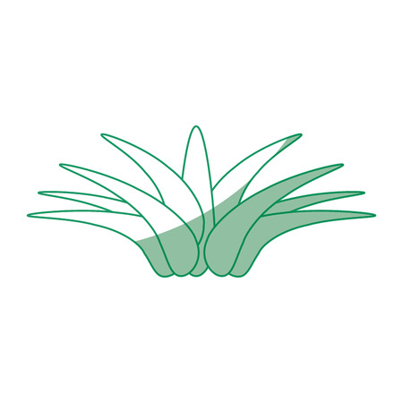 isolated savila plant icon vector illustration graphic design