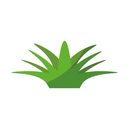isolated savila plant icon vector illustration graphic design