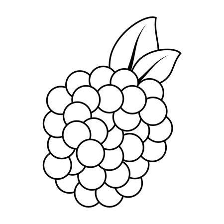 절연 달콤한 블랙 베리 아이콘 벡터 일러스트 그래픽 디자인 일러스트