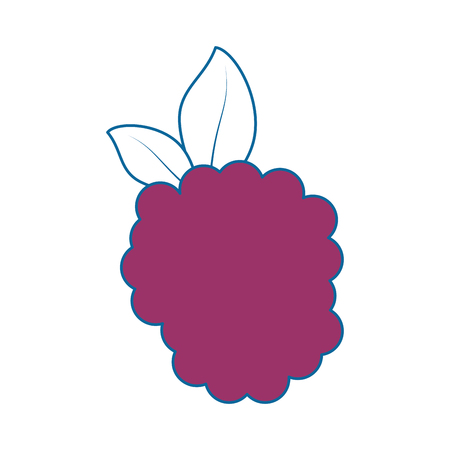 blackberry fresh fruit icon vector illustration graphic design 向量圖像