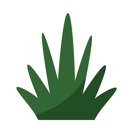 grass plant isolated icon vector illustration graphic design