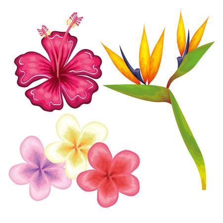 흰색 배경 벡터 일러스트 레이 션 위에 다채로운 열대 꽃
