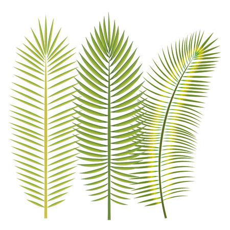 Tropical leaves over white background vector illustration