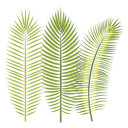 Tropical leaves over white background vector illustration